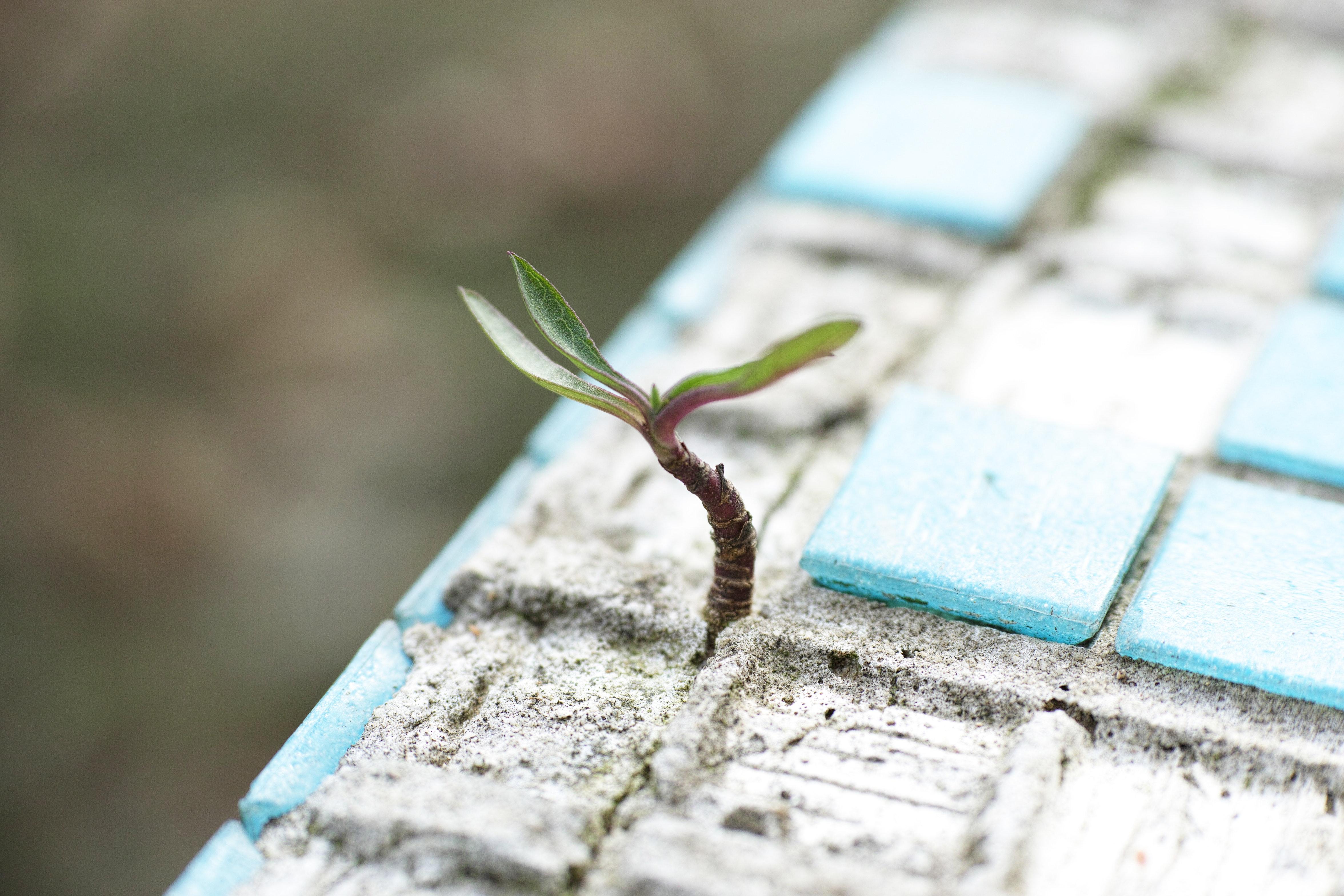 växt tränger sig igenom mosaik